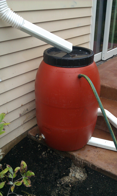 Rain barrel in place with overflow connected