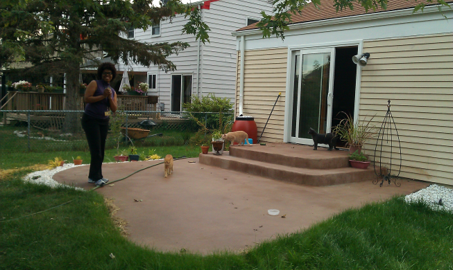 Grass growing around the patio. From left to right: Chrissy, Nico (our neighbours' cat), Barry and Shaun.