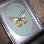 Pinned and framed butterfly